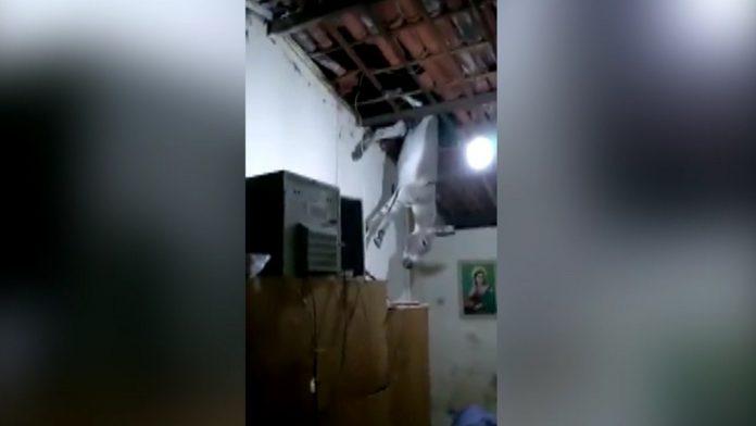 Jumento sobe em telhado de casa e por pouco não cai em cima da dona